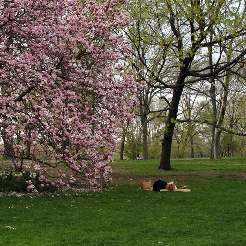 Printemps dans Central Park